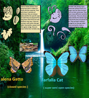 Falena Gatto and Farfalla cats ref sheet 2016 by GingerStars