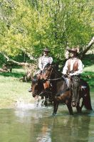 Cowboys 25 by Karls-Stock