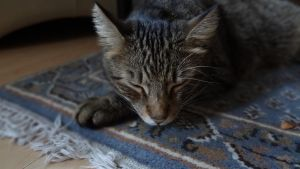 The Relaxing Cat by janosch500