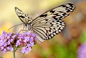 Butterfly Feeding by h-e-photography
