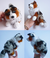 FOR SALE: Australian Shepherd (Blue merle) by goiku