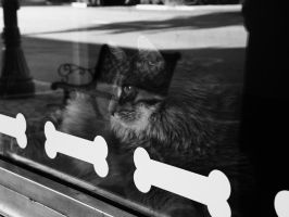 Kitty In The Window. by Dark-and-Dreamless