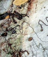 abstract art in a scribbly gum by addon