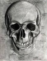 Skull by thevictor2225