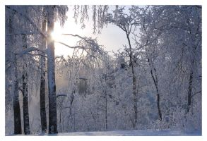 Cold Sun by xuvi