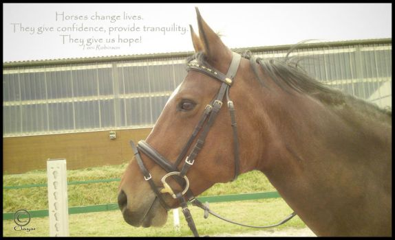 Horses change lives... by Clayar