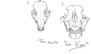 Fox skulls for Kyra's tattoo by Blossomleafstylez