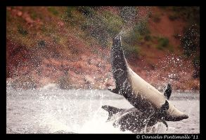 Playful Dolphins by TVD-Photography