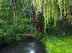 May 23 - Weeping willow bridge and stream by HermitCrabStock