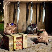 Three Blind Mice by PigParadise