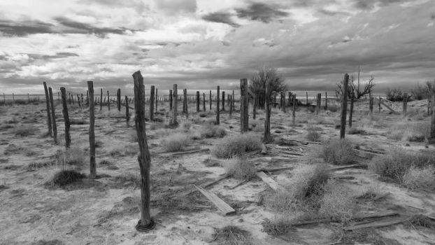 Fence Posts...Black and White by BuzzyG