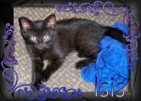 Her name is Isis by DazinaCramoski