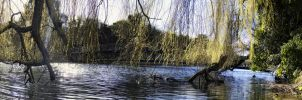 River with trees in Portsmouth by D4D4L