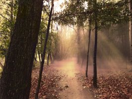 Path in the forest ( sunset light) Premade by Simbores