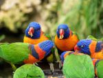 Lunch with the Lorikeets by Azerane