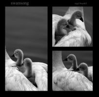 swansong by photonig