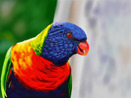 Lorikeet by ArtofJeffHebert