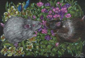 :GIFT: Rats by mustingel