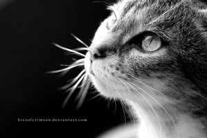 Looking Up At You by KissofCrimson