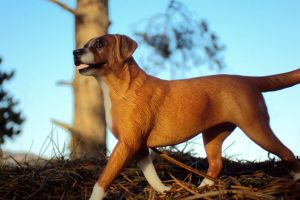 Breyer Dog by dyb