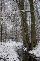 12-02 Winter Forest by evionn