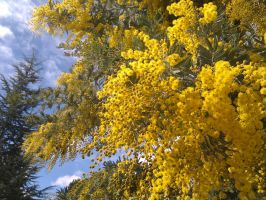 Yellow Delight by Tithos
