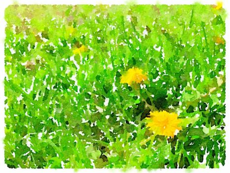 Dandelions Watercolor by asommersby
