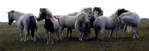 Noble Stallions by TheDayILiveFor