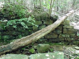 A Wall in the Woods 1 by MorganCG