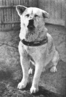 the Real Hachiko by jennymaycry