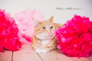 Little redcat by Pamba