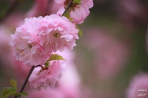 Spring time by MDDahl