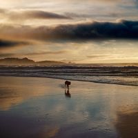 dog day afternoon by VaggelisFragiadakis