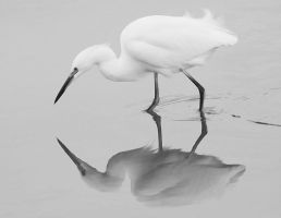 egret3 by cenevols