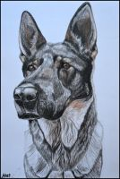 Portrait of dog I. by Ennete