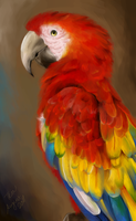 Parrot by Eyedraw