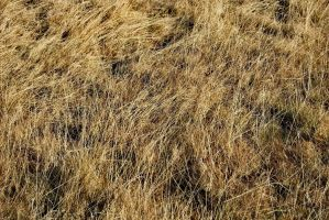 yellow autumn mountain grass 3 by deepest-stock