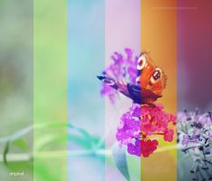 Color actions by EliseEnchanted