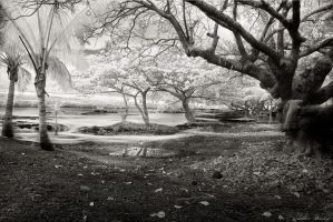 Hawaii in Beveled Glass by rsiphotography