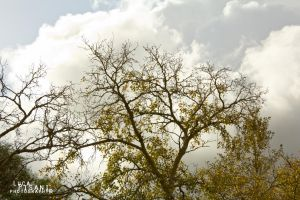 The Waving Branches by Maltese-Naturalist