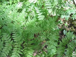 Fern green by Anilestock