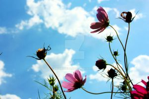 A bugs perspective by mskrissi87