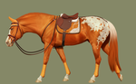 Buttweiser's show jumping tack - ironstone wip by BH-Stables