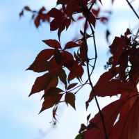colours of autumn II by Wilithin