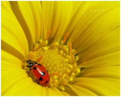 Ladybird III by Sembre