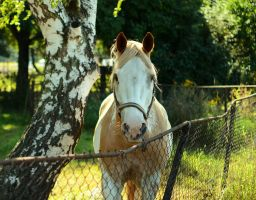 sunny horse by sys66