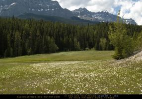 Mountain Meadow 1 by SalsolaStock