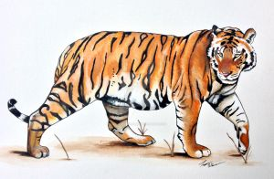 tiger painting by daylightdreams