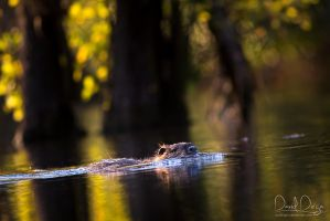 Autumn nutria incoming by Wolfling01
