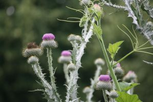 view to thistles by ingeline-art